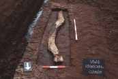 The damaged side of the 'Red Man' of Kilbeg, during excavation in 2003 in Kilbeg townland, Ballykean Bog, Co. Offaly (Image: Irish Archaeological Wetland Unit)